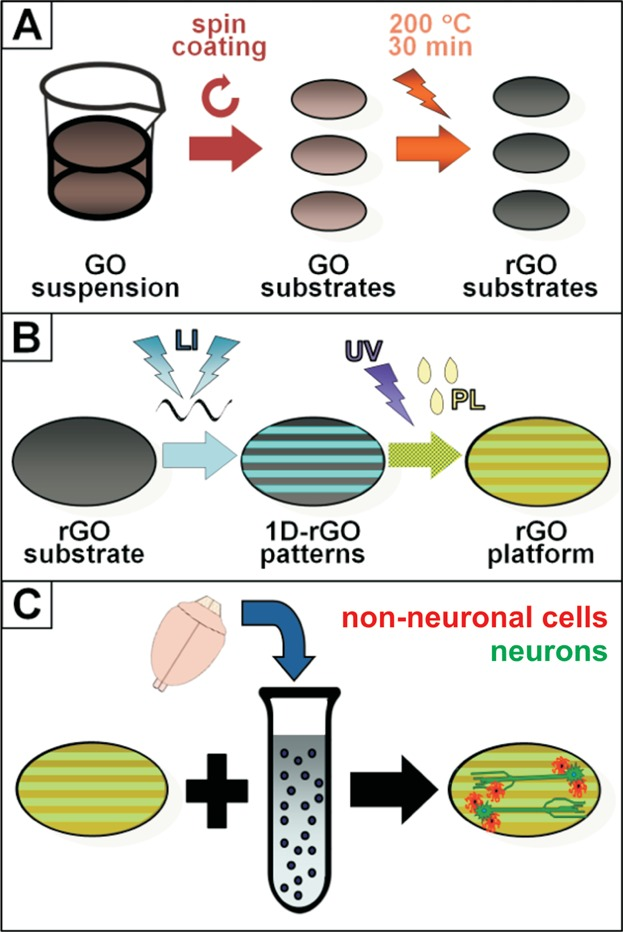 Tailored Fringed Platforms Produced by Laser Interference for Aligned Neural Cell Growth