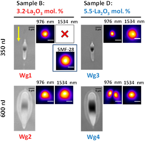 Femtosecond laser writing of photonic devices in borate glasses compositionally designed to be laser writable.